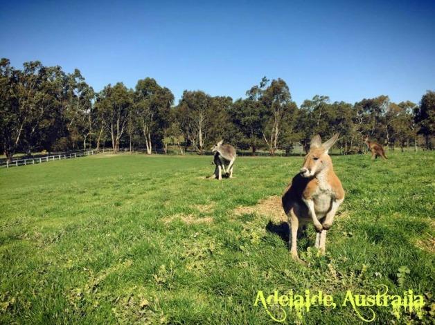 adelaide-australia-12