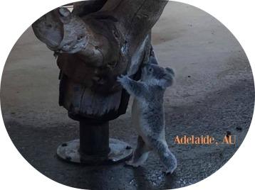 adelaide-australia-15