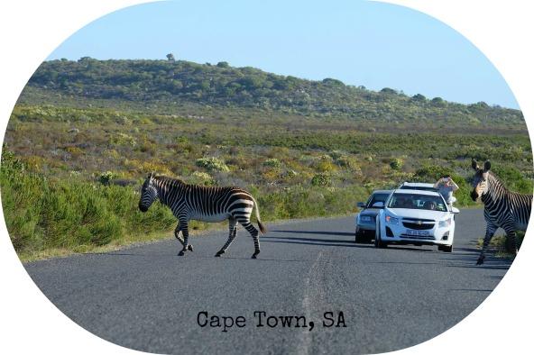 cape-town-sa-26