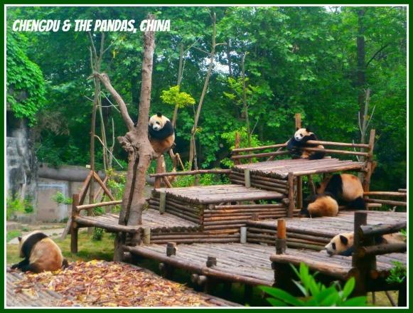 chengdu-pandas-china-30