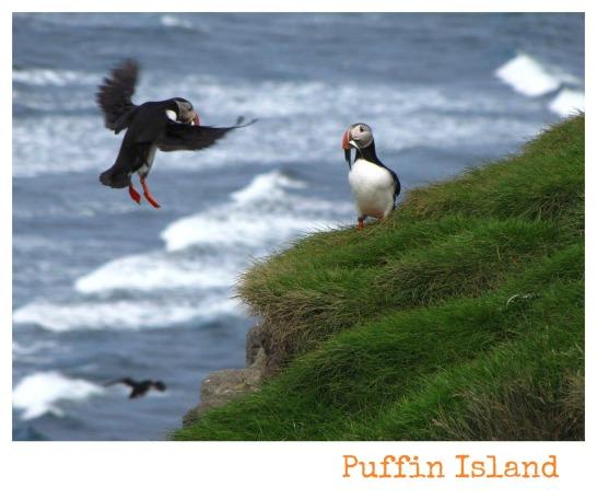 island-puffin-island-26